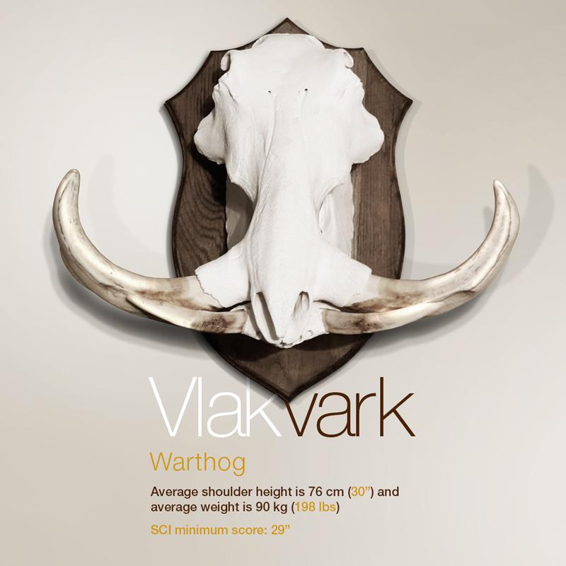 Vlakvark - Warthog