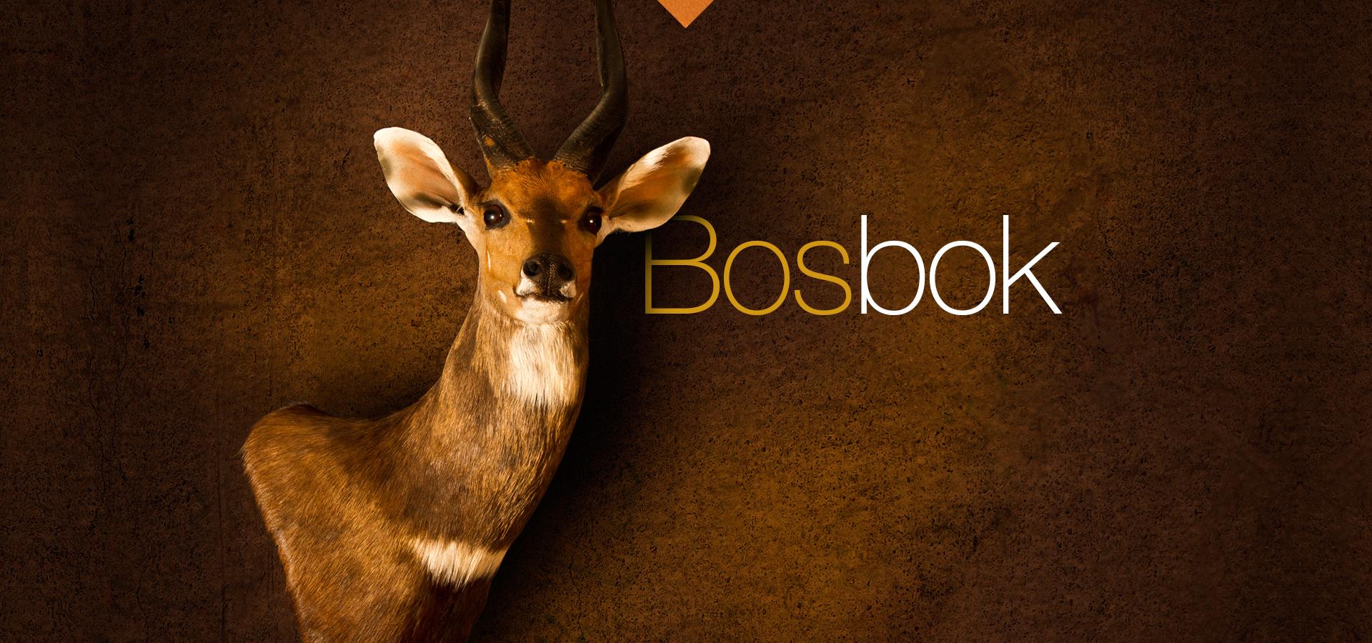 Bosbok - Bushbuck