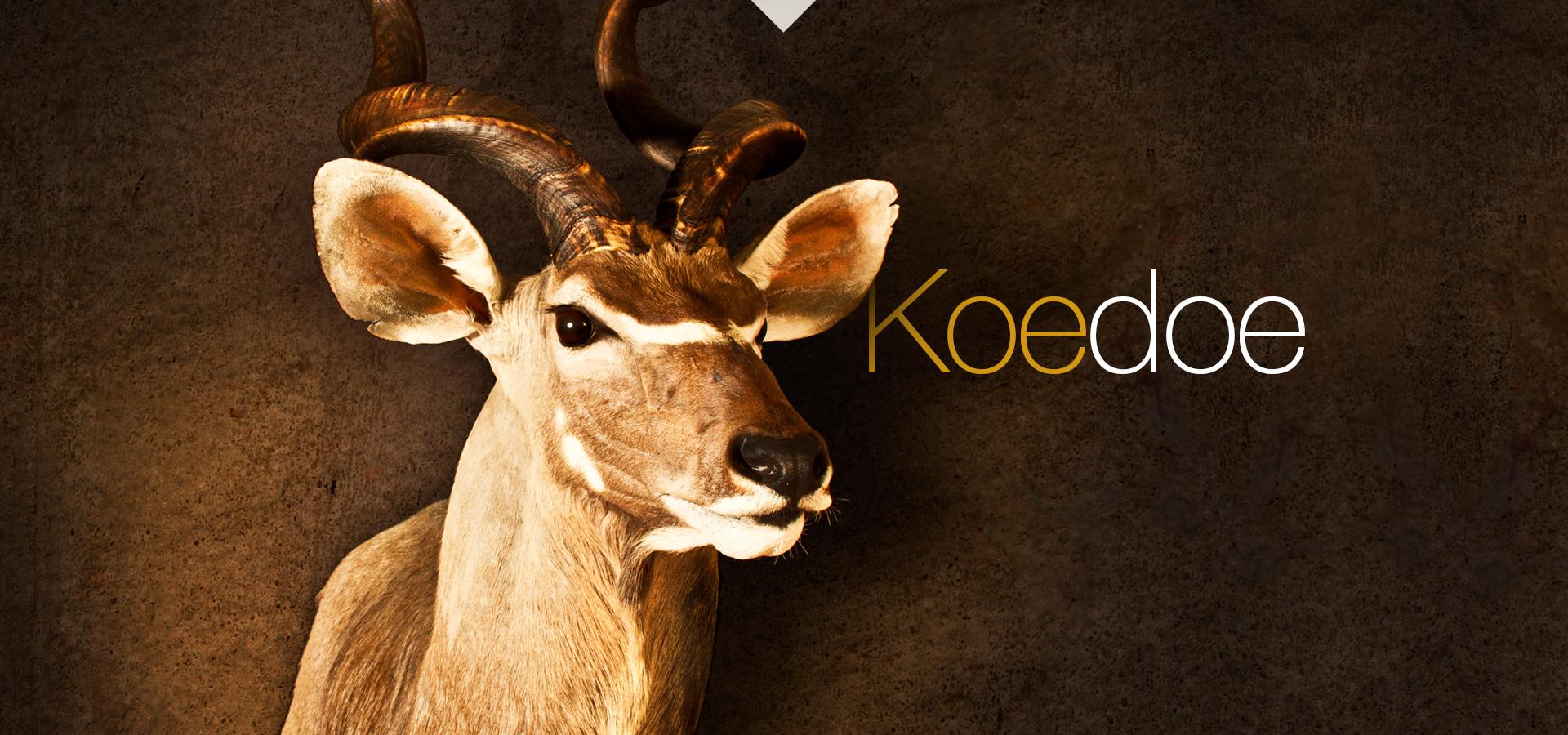 Koedoe - Kudu