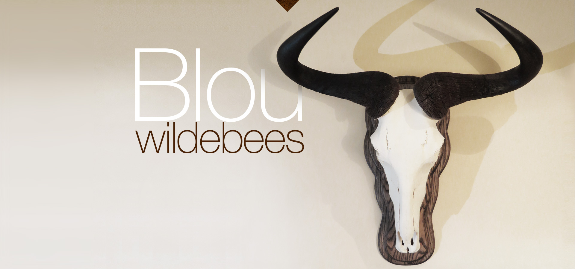 Blou wildebees - Blue Wildebeest
